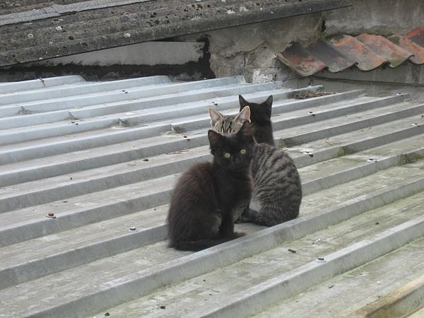 Kittens on a roof.jpg