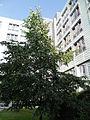 Klinikum Nürnberg Nord Juli 2012 39.JPG
