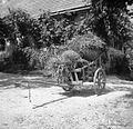 Korenje v prockah na kulah, Podgorica 1948.jpg