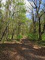 Krasnyy Khutir forest2.jpg