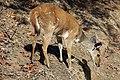 Kruger National Park, South Africa (36041290794).jpg