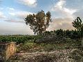 La Pobla Llarga, 46670, Valencia, Spain - panoramio.jpg