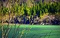 Lago del Predil - 3.jpg