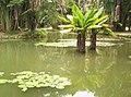 Laguna del Jardín Botánico de Río de Janeiro.jpg