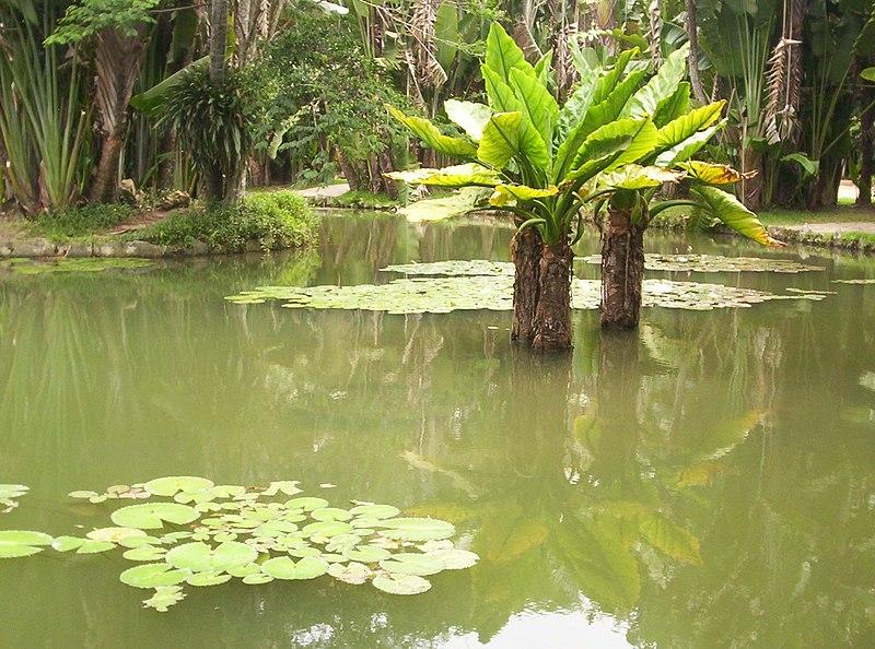 Ficheiro:Laguna del Jardín Botánico de Río de Janeiro.jpg