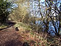 Lakeside Footpath at Fonthill - geograph.org.uk - 320625.jpg