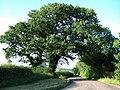 Lane at Oak Dene - geograph.org.uk - 465250.jpg