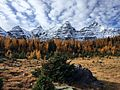 Larch Valley.jpg