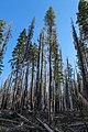 Lassen Volcanic National Park (0f0d4bfe-5b29-4c9f-8063-3e5789e9d25d).jpg
