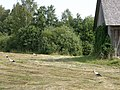 Latvian countryside - panoramio - Paul Berzinn (1).jpg