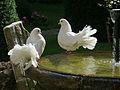 Lazio Montecassino2 tango7174.jpg