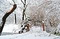 Lebenswertes chemnitz schneebruch stadtpark winter.jpg