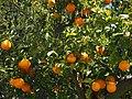 Lets become orange.jpg