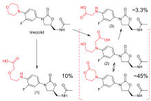 Upper left: structural formula of the unaltered linezolid molecule, with the morpholino group highlighted in red. Lower left: main carboxylic acid metabolite, accounting for 10% of an excreted dose; the morpholine ring has been cleaved at the nitrogen atom. Lower right: structural formulae of two distinct molecules, a carboxylic acid and a lactone, with an equilibrium arrow between them; this metabolite accounts for 45% of a dose. Upper right: structure of a minor carboxylic acid metabolite, which accounts for aroune 3.3% of a dose.