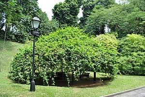 Lionel Vivian Bond - Bond Terrace, Fort Canning, Singapore