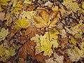 Listí na hrázi rybníka.JPG