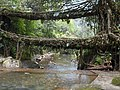 Living Roots Bridge.jpg