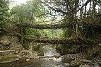 Living root bridges of Nongriat village in East Khasi Hills district, Meghalaya JEG7387.jpg