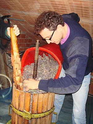 Loading raisin grapes that have even been drie...