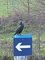 Looking away - geograph.org.uk - 1629365.jpg