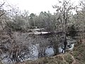 Looking down at Suwannee River from US41 Wayside Park, Hamilton County.JPG