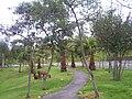Los animales y la naturaleza del parque.JPG