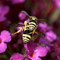 Love on a purple flower... (5985751239).jpg
