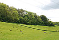 Lower edge of Park Wood - geograph.org.uk - 444567.jpg