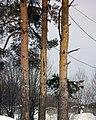 Lyovintsy, Kirovskaya oblast', Russia, 612079 - panoramio (66).jpg