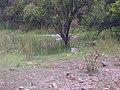 Madikwe.jpg