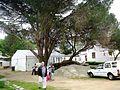 Mamre Slave Tree.jpg