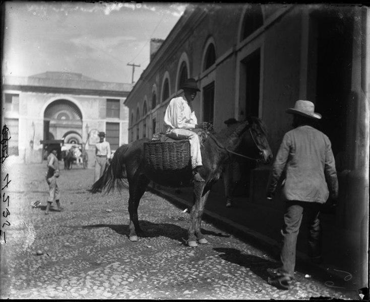 File:Man on horse, street (3795474173).jpg