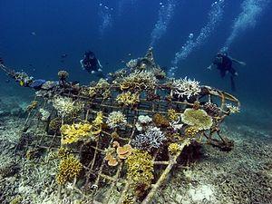 Manta ray Biorock reef
