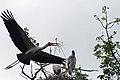 Manyara 2012 05 29 2167 (7482079874).jpg