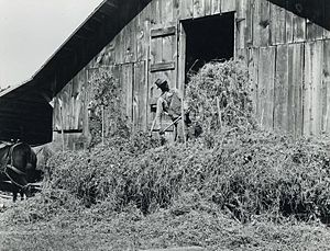 Pittsylvania County, Virginia - Loading hay, Blairs, Pittsylvania County, 1939. Marion Post Wolcott