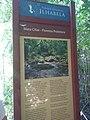 Mata ciliar - Floresta protetora 4.jpg