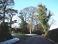 Mature trees, at the entrance to Farringdon House - geograph.org.uk - 1154821.jpg