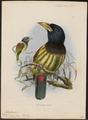 Megalaima virens - 1870-1871 - Print - Iconographia Zoologica - Special Collections University of Amsterdam - UBA01 IZ18800025.tif