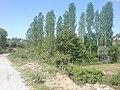 Mesken köprüsünün eski hali ( a. nazilli ) - panoramio.jpg