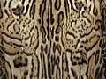 Mexican Ocelot fur coat 5.jpg