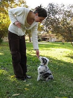 Dog training Practice of teaching behaviors to dogs