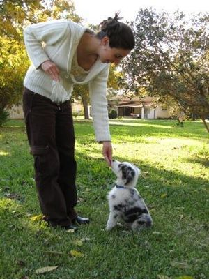 Dog training - Training a puppy to sit