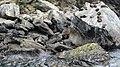 Milford Sound, South Island - panoramio (36).jpg