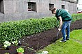 Ministru kabineta dārzeņu dobes atklāšana (7247958108).jpg