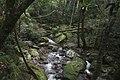 Minnamurra Rainforest - panoramio (7).jpg