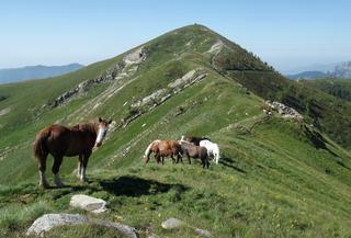 Parco naturale regionale delle Alpi Liguri Nature reserve in Italy