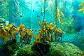 Monterey Aquarium I (19336721603).jpg