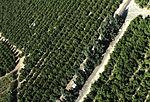 More green israel (392246122).jpg