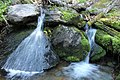 Moss and Stream Detail, Wallowa-Whitman National Forest (26195910064).jpg