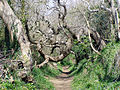 Mottistone, path up onto the downs - geograph.org.uk - 18295.jpg